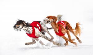 DigitalPHOTO-Fotograf des Jahres: Die 10 besten Bilder zum Thema Sport