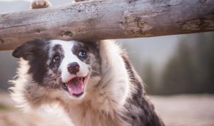 """""""Und alle so … Wau!"""" –Die bezaubernden Hundefotos der Fotografin Iza Łyson"""