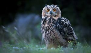 Tipps für scharfe Lowlight-Tieraufnahmen