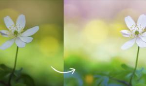 Blumen in der Makroperspektive