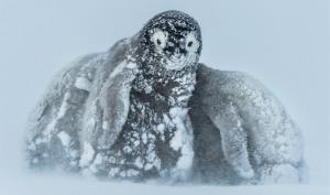 Fotograf des Jahres: Leser-Wettbewerb: Wildlife