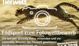 Fotowettbewerb: Ihre schönsten Tiermotive