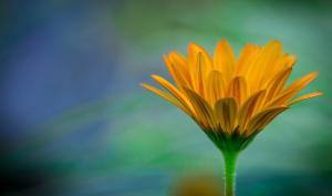 Leserfotos: Außergewöhnliche Blütenpracht