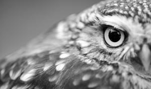 Tierfotografie: Warum sich das Üben im Wildpark lohnt