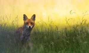 So gelingen Ihnen Tierfotos in der freien Natur
