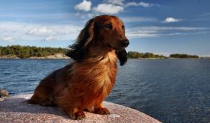Welthundetag 2016 – 10 Bilder aus der Lesergalerie