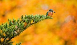Herbstfotos - Traumfarben oder Tristesse?