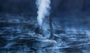 GDT Europäischer Naturfotograf des Jahres
