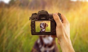Praxistipps für Haustierfotografie mit Gratis E-Book