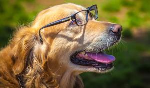 Tag der Haustiere: Die 12 lustigsten Einsendungen aus der Lesergalerie