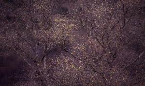 International Garten Photographer of the Year: Die schönsten Gartenfotos aus aller Welt