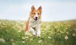 Fototipp des Tages: Dynamisches Hundeporträt