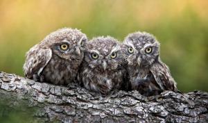 """Leserwettbewerb:  Die Top 10 aus der Kategorie """"Wildlife"""""""