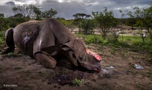 Der Gewinner steht fest: Wildlife Photographer of the Year 2017