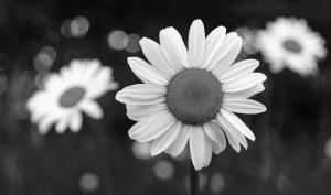 Foto-Basics: ausgewogene Schwarzweißfotos