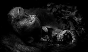 Die beeindruckendsten Wildlifefotos des Jahres