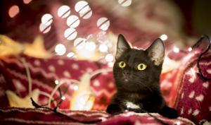 Die schönsten Weihnachtsfotos aus der Lesergalerie