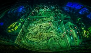 "Ein Deutscher wird zum ""Underwater Photographer of the Year"" gekrönt"