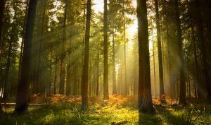 Foto-Basics: Lichtstrahlen im Wald