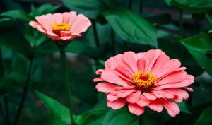 Foto-Basics: fotogene Garten-Kulisse