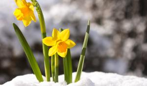 Foto-Basics: Hallo Frühling!