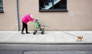 SWPA 2018: Drei deutsche Fotografen unter den Siegern