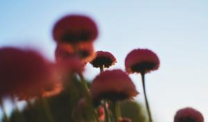 Foto-Basics: Perspektive wechseln