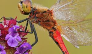 DigitalPHOTO-Akademie: Auf der Pirsch nach Libellen