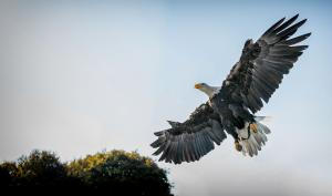 DigitalPHOTO-Akademie: Greifvogelfotografie in Remscheid
