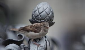 DigitalPHOTO-Akademie: Fotokurs für Anfänger