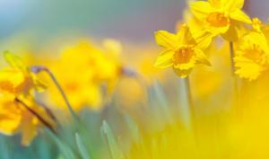 Foto-Basics: Diese Blütezeiten sollten Sie kennen!