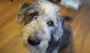 Ein Hund im Büro?! Wir stellen unser jüngstes Redaktions-Mitglied vor