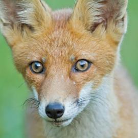 Fotograf des Jahres 2014 Wildlife