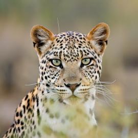 Fotograf des Jahres 2018 Wildlife
