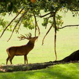 Fotograf des Jahres 2012 Wilde Tiere