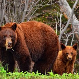 Fotograf des Jahres 2013 Wildlife