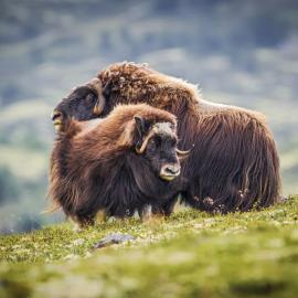 Fotograf des Jahres 2016 Wildlife