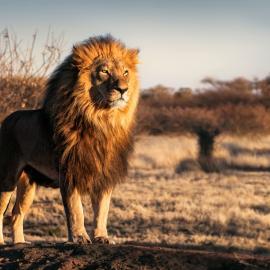 Fotograf des Jahres 2019 Wilde Tiere