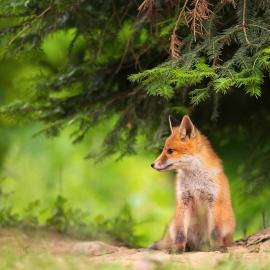 Fotograf des Jahres 2020 Wildlife