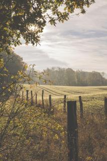 Herbstliches Feld