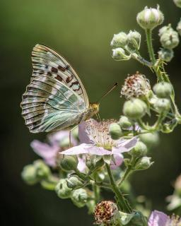 Schmetterling an Blüte