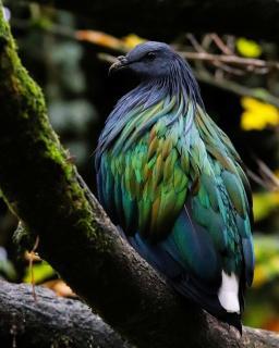 Schillernder Vogel