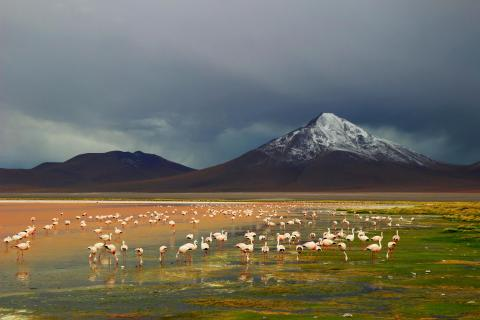 Altiplano in Bolivien