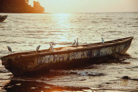 Verlassene schiff mit Vogeln
