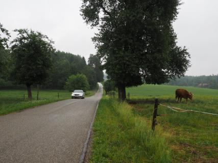 Straße an der Weide