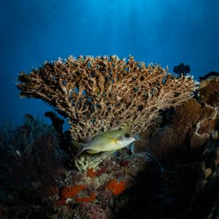 Reef View Indonesia
