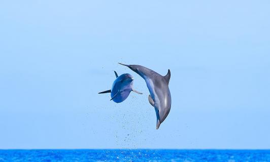 Delfine im Sprung2.1