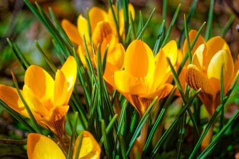 Erster Gruß des Frühlings