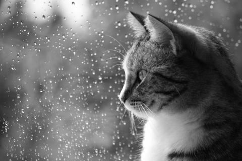 Wann hört der Regen auf