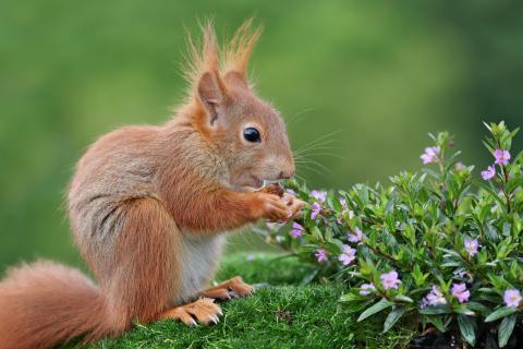 Lächelndes Eichhörnchenkind